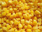 Закупаем дорого кукурузу,  пшеницу,  ячмень