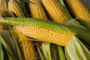 Куплю кукурузу,  пшеницу,  тритикале