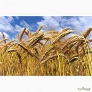 Куплю пшеницу 3кл. ДП