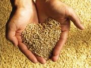 Продам пшеницу,  ячмень,  жмых,  шрот