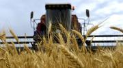 Зерновая компания закупает пшеницу,  ячмень,  кукурузу,  Жмых,  Сою, Рапс..