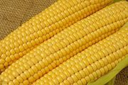 Продам кукурузу на экспорт,