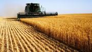 Покупаем зерновые и масличные культуры у производителя,  дорого