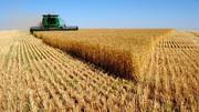 Купляємо зернові та масличні культури,  дорого