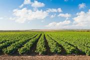 Купуємо пшеницю, ріпак, сою, кукурудзу, насіння соняшника, ячмінь
