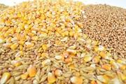 Кукуруза,  фуражная пшеница,  соя