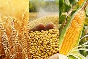 Кукуруза,  пшеница,  соя куплю
