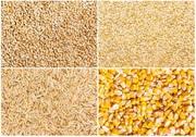 Куплю кукурудзу,  пшеницю,  сою. Зерновідходи