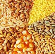 Куплю зерновые дорого по всей территории Украины