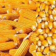 Закупаем  зерновые на постоянной основе
